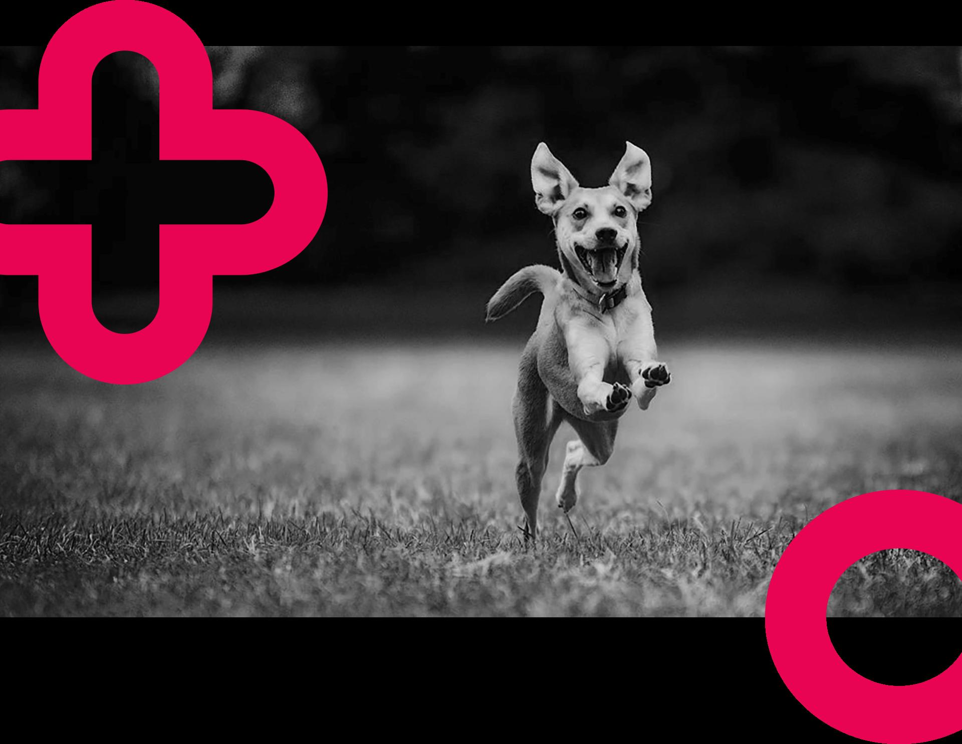 dog-logo-elements-2020